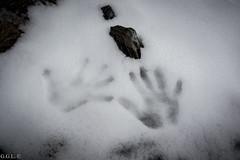 Pic de l'liga. Vall de Nria. Empremtes (guigonliz) Tags: pic de lliga vall nria valle valley tal valle  pirineu pirineo  pirenei pyrnes pyrenees queralbs girona gerona catalunya catalonia catalogna catalogne catalua  europa europe european  eagle peak nieve snow neve  schnee neige excursin trek hiking  nikon d5200  mountain montaa montanya  berg aire libre animal pjaro serenidad mano manos hand hands   main huella paw print empremta  tracks