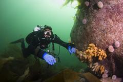 20160803-Eyemouth22 (Dacmirc) Tags: eyemouth diving ukdiving rebreather