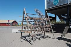 20160720 DSC_2228 Sby Havn (quart71) Tags: danmark havn nordjylland sby denmark fish fisk harbor