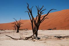 namibia2015-75 (yriis) Tags: namib desert sand immensity uninhabited wildness dune travel 45 red sky blue africa namibia kalahari