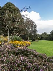 Clyne Gardens 2016 09 30 #20 (Gareth Lovering Photography 3,000,594 views.) Tags: clyne gardens botanical swansea wales flowers trees shrubs park olympus stylus1s garethloveringphotography