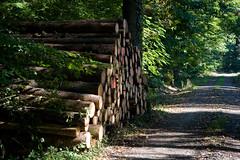 ckuchem-8345 (christine_kuchem) Tags: abholzung baum baumstmme bume einschlag fichten holzeinschlag holzwirtschaft wald waldwirtschaft