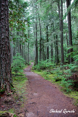 Glacier National Park - 08 (shehzadq) Tags: cedars glaciernationalpark hikingtrail montana oldgrowthforest