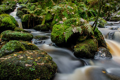 Wyming Brook, Sheffield (Peter Quinn1) Tags: wymingbrook sheffieldrotherhamwildlifetrust sheffield cascade river fern moss rivelin longexposure southyorkshire redmires