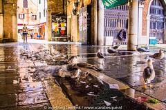 Venetie 2016 bewerkt 960px (30 van 183) (Borgje22) Tags: venetie venice venezia