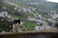 Chefchaouen (28) (jim_skreech) Tags: chefchaouen chaouen morocco ref blue cat