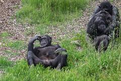 Relaxing! (Stephen_Beaumont) Tags: monartozoo 55200 fujixt1 animals