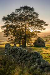 Roach End Field Barn (Dave Fieldhouse Photography) Tags: workshop 121 peakdistrict staffordshire staffordshirelife theroaches roachendbarn nationalpark portrait outdoors field barn drystonewall sunset autumn trees starburst canon5dmarkiii canon5dmark3 2470mmf28l2 diffusedlight