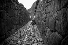 Running (Ollantaytambo, Peru. Gustavo Thomas  2016) (Gustavo Thomas) Tags: running corriendo boy nio enfalt peruvian peru cusco cuzco inkastreet streetphotography fotografadecalle southamerica sudamrica people gente gens blackandwhite blancoynegro monocromtico monochrome bnw