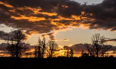 Tauranga Sunset (Kiwi-Steve) Tags: sunset nz newzealand northisland bayofplenty tauranga colour cloud trees silhouette nikon nikond7200 astiques