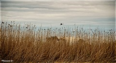 Albufera (rossendgricasas) Tags: landscape nature texture nikon photography lightroom albufera photograph valncia