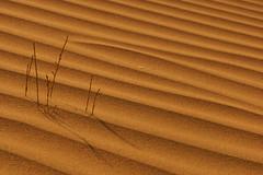 Sand & Shadows (haidarism (Ahmed Alhaidari)) Tags: shadow plant sticks waves shadows desert snad