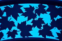 Maple Leaves (Tom Hilton) Tags: color foundinsf