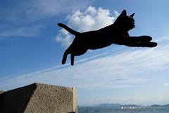 (GINPA ) Tags: jump sony sa        jump
