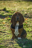I'm the keeper of this place! (Jam Photography & Digital Art) Tags: dog sun sunlight nature animal prom bassethound liara