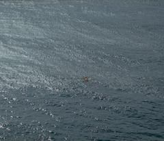 Sandanbeki #10  (Yaki_imon) Tags: sea bird japan wakayama filmscan pentax6x7 sirahama kodakektar100 sandanbeki epsongtx820 n56308 pentaxsmctakumar6x7200mmf4
