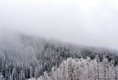 Snowscape (laurenejohnsonphotography) Tags: santa new trees sky mist snow mountains lauren fog de landscape mexico frost altitude indian arts johnson iaia institute american e fe sangre snowscape cristos