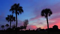 December 27 Sunset. (Jim Mullhaupt) Tags: pink blue trees sunset red wallpaper orange sun color weather silhouette yellow clouds landscape evening oak nikon flickr sundown florida dusk palm tropical coolpix sarasota cortez bradenton p510 mullhaupt jimmullhaupt