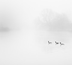 Misty Day (Martyn.A.Smith LRPS) Tags: trees monochrome fog river geese waterfeature warwickshire stratfordonavon canon7d