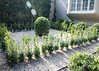 (deanmackayphoto) Tags: window yard garden landscape design losangeles gate topiary entrance hedge drought lensflare shutter shrub westhollywood gravel boxwood landscapedesign droughtresistant larisacode