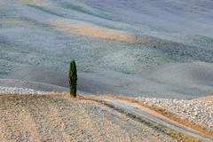 DSC_7875-a (wzabrocka) Tags: italia toskania pejzaz cyprysy