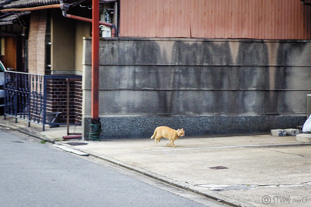 Today's Cat@2015-01-25