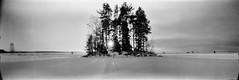 Finally ending January (Foide) Tags: panorama pinhole 617 pinholetree filmfilmforever f233 realitysosubtle rss141