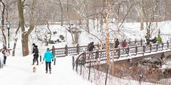 Central Park: Winterland (rtanphoto) Tags: nyc newyorkcity winter usa white snow cold nature photoshop canon souvenirs centralpark empirestate bigapple winterland touristattraction snowland niksoftware ononesoftware rommeltan rtanphoto wwwrommeltanphotographycom
