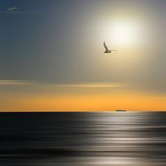 Nel Sole (G.hostbuster (Gigi)) Tags: longexposure sunset sea ship seagull ghostbuster gigi49