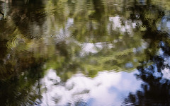 insects on water I (seejayarr) Tags: trees light reflection green nature water photography 50mm australia brisbane queensland goldcoast springbrooknationalpark canon60d
