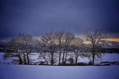 Isre - Terres froides - paysages neiges (Jean-Philippe Le Royer) Tags: snow montagne landscape ciel arbres neige nuages arbre paysages isere