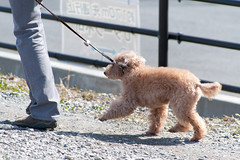 DS7_9741.jpg (d3_plus) Tags: street sky dog nature japan walking tokyo outdoor fine daily   tamron    dailyphoto kawasaki thesedays  fineday   tamron28300mm tamronaf28300mmf3563  a061   d700  tamronaf28300mmf3563xrdildasphericalif  nikond700 tamronaf28300mmf3563xrdildasphericalifmacro tamronaf28300mmf3563xrdild a061n