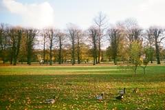 A Delight (cavasabine) Tags: blue autumn cloud tree green fall film leaves yellow copenhagen denmark duck leaf lomo kodak lawn delight leisure