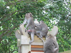 A Family of Long Tailed Macaques