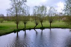 Rebel (Michiel2005) Tags: holland tree netherlands nederland boom willow vijver wilg knotwilg