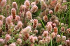 (Elbmaedchen) Tags: plant nature natur pflanze grser wildpflanze