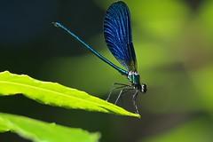 Libe6 (bidueiro) Tags: naturaleza insectos macro macrofotografa