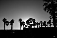 Soando despierta... (ZAP.M) Tags: atardecer verano sunset siluetas contraluz novosanctipetri chiclana cdiz andaluca espaa flickr zapm mpazdelcerro nikon nikond5300