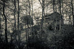 _MG_9527 (Fernandolunad) Tags: bw byn blancoynegro blackandwhite forest nature bosque naturaleza paisaje cabaa landscape
