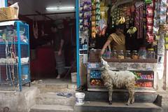 Goat (Raghunathan Anbazhagan) Tags: madras nationalgeographic natgeo emotions people streetphotography food life urban shop slaughter kill man women goat tamilnadu street chennai tamilnadustreet india color st