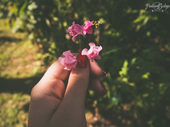 Una ms. (Pauluna B.) Tags: flickr nature flower flowers vintage fade faded green pink summer digital white sun park photography love lovely trees art shot cool