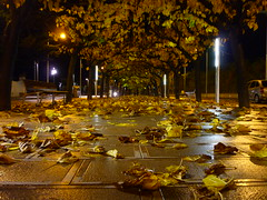 Moreras (calafellvalo) Tags: autumn hojas noche paseo fulles moreras calafellvalo paseomorerasnocheotoñoautumn