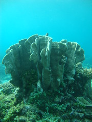 Coral Pulau Biawak