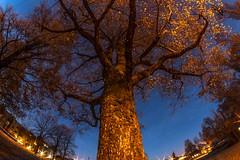 December 3, 2014 (Amanda Catching) Tags: longexposure morning winter light vancouver east