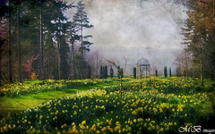 Daffodil Walk (maureen bracewell) Tags: morning flowers trees england texture nature yellow landscape spring walk yorkshire sunny obelisk daffodils thorpperrow redbubble maureenbracewell saariysqualitypictures magicunicornverybest
