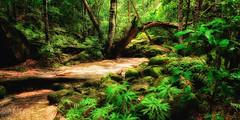 Forest walk (IainPallotPhotography) Tags: longexposure waterfall rainforest australia newsouthwales somersby sommersbyfalls