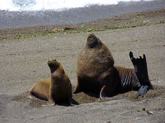 Puerto Madryn-27