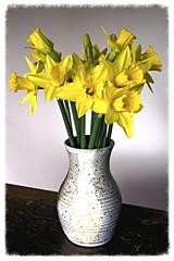 Happy New Year! (rosberond) Tags: flowers sunshine yellow spring vase anticipation daffodils happynewyear canonefs1785mmf456isusm