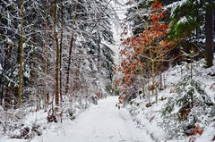 The forest path. (Bessula) Tags: trees winter snow nature forest sweden path coth bessula magicunicornverybest coth5