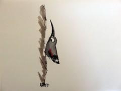 Tichodrome chelle - Tichodroma muraria (Franois Berthet) Tags: bird sketch drawing dessin humoristic letraset pigma muraria tichodroma promarker wallcreeper tichodrome chelette
